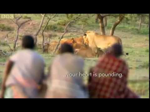 3 African Men Stealing 15 Lion's Food Without a Fight - YouTube