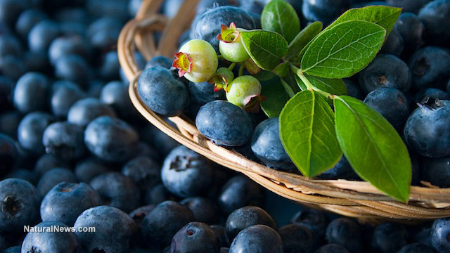 Scientists discover that fermenting blueberries can restore cognitive function, improve memory for people with amnesia – NaturalNews.com