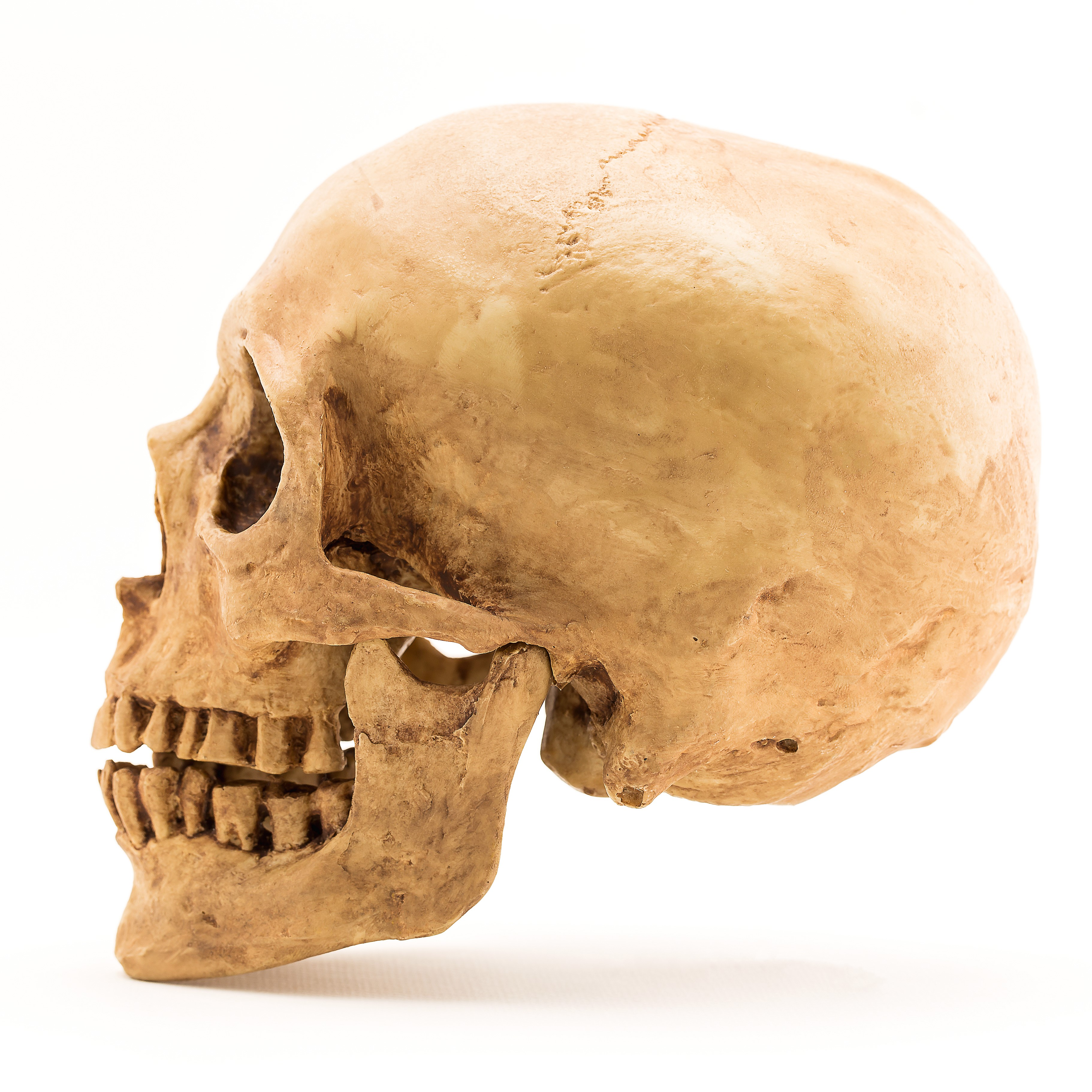 Africans Migrated from Continent Sooner Than We Thought, As 210,000-Year-Old Skull Found In Europe